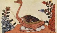 Une page du Livre des animaux (Kitâb al-Hayawân) d'al-Djâhiz représentant une autruche couvant ses œufs, sur un manuscrit du xive siècle provenant probablement de Syrie. L'autruche a un statut particulier dans la classification d'al-Djâhiz : comme elle ne vole pas, il ne la classe pas parmi les oiseaux, malgré la présence d'ailes, de plumes et d'œufs. Bibliotéca Ambrosiana, Milan, cat. n° D 140 inf, cote n°1r-87v